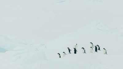 Rorqual dans les eaux glacées, espèce protégée