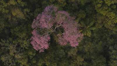 La réserve naturelle Ibera, lapachos