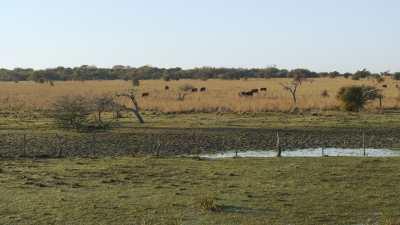 Fermes près de la réserve naturelle Ibera