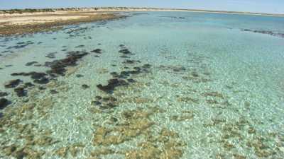 Stromatolites à travers l'eau