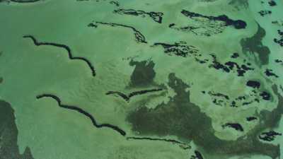 Wooramel Seagrass, prairie d'algues de Shark Bay
