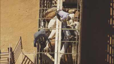 Rassemblement du bétail dans des enclos