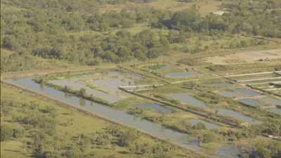 Elevage intensif de bovins, ferme d'aligators