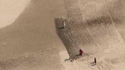 Semence de graines et culture sur le sable d'un char