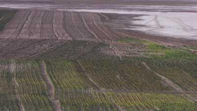 La lisière du Salar et des plantations d'arbres