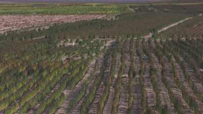 Plantations d'arbres au bord du salar