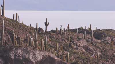 Salar et île d'Incahuasi