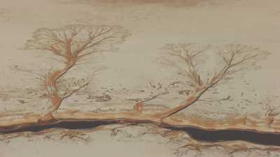 Dessins d'arbres sur le Salar