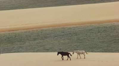 Chevaux, Parc National des Lençois Maranhenses