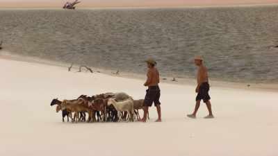 Bergers et chèvres, Parc National des Lençois Maranhenses