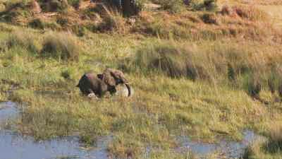 Éléphants, pique-boeuf