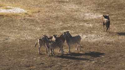 Zèbres, antilopes, gnous, koudous