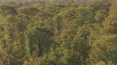 Éléphants, buffles dans la savane humide