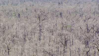 Forêt noyée par le barrage d'Imboulou