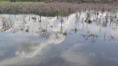 Forêt noyée par le barrage Imboulou