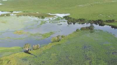 la rivière marécageuse Likouala aux herbes, affluent du Congo