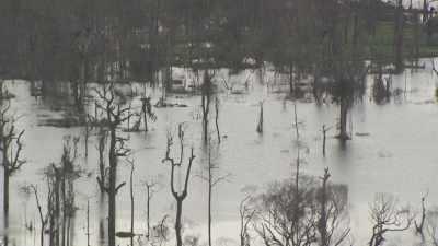 Le lac du barrage d'Imboulou d'où émergent les arbres