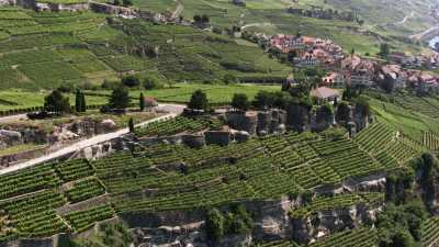 Plans rapprochés des vignobles de Lavaux en terrasse
