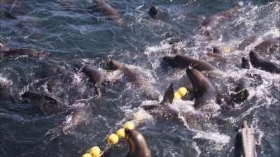 Pêche à la sardine, les pêcheurs remontent les filets