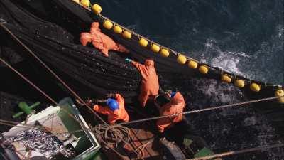 Pêche à la sardine, les sardines sont déversées à bord