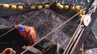 Gros plans de filets de sardines et de pêcheurs