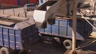 Chargement des sardines sur les camions au port