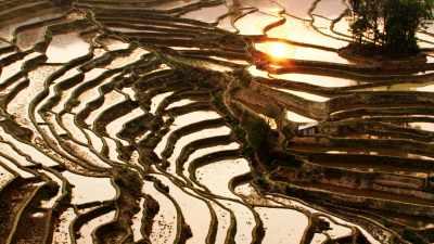 Crépuscule sur les rizières