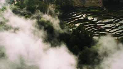 Rizières en terrasses dans la brume