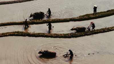 Paysans cultivant les rizières de Yuanyang