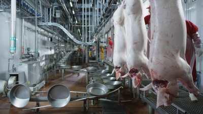 Usine porcine