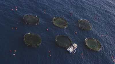 Bassins de pisciculture au large du port de Béjaïa