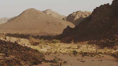 Végétation dans le lit asséché d'une rivière dans le désert