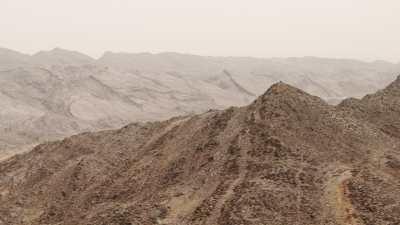 Arbres et dromadaires dans le désert
