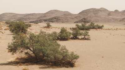 Plan au ras du sol des arbres dans le désert