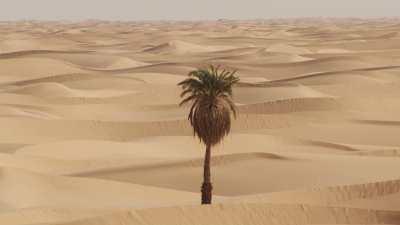 Palmier dans le désert près de l'Oasis