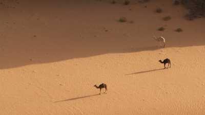 Dromadaires et canyon, dans le désert rocheux de la région de Djanet