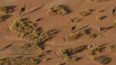 Dromadaires en groupe et leur berger, dans le désert rocheux de la région de Djanet