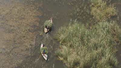 Ramasseurs d'herbe sur le lac Burullus