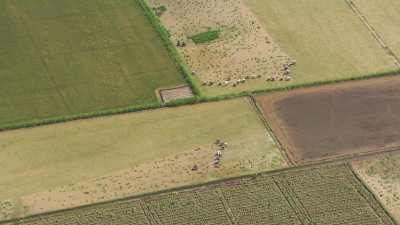 Paysans dans les champs près d'Alexandrie