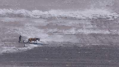 Paysan laboure des terres inondées avec un cheval