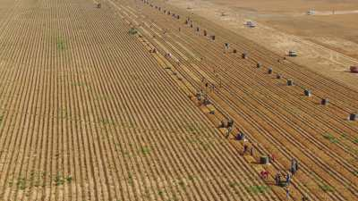 Ramasseurs de pommes de terre