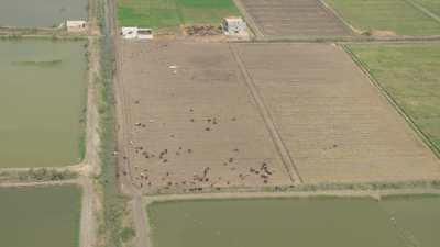 Plans sur les champs, petit troupeau de chèvres et petite ferme