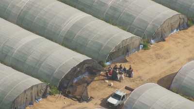 Serres agricoles