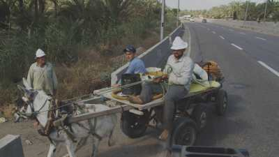 Charrette, tracteur et récolte