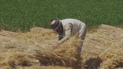 Séparation du blé