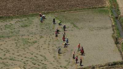 Plantations dans les champs inondés