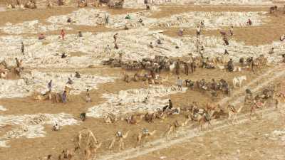 La pénible extraction du sel sur le lac Assal
