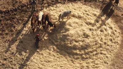 Paysage et zoom sur les paysans du Tigray aux champs