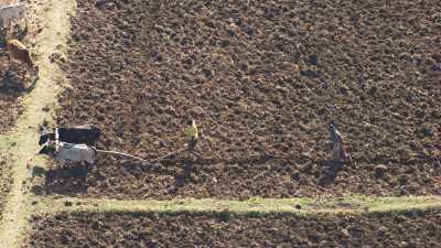Paysans du Lac Tana,soc et charrue