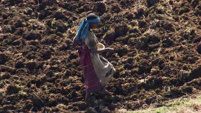 Paysans du Lac Tana, soc et charrue, semis